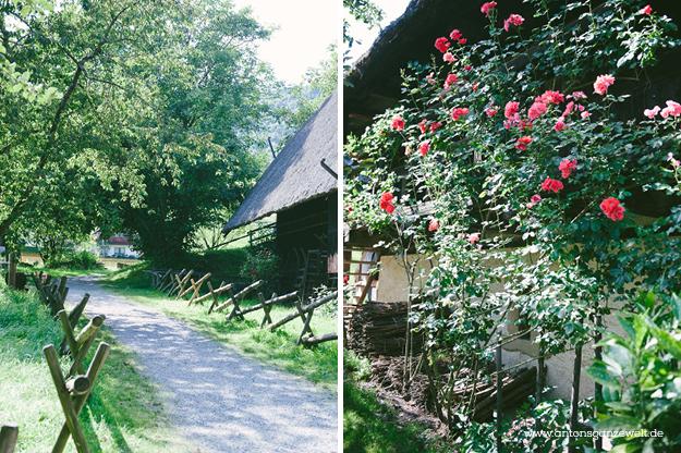 Gutach im Schwarzwald Sommerrodelbahn Vogstbauernhöfe Antons ganze Welt14
