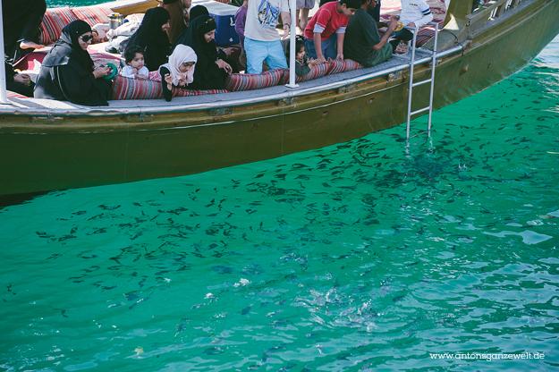 Dhow Cruise Musandam11