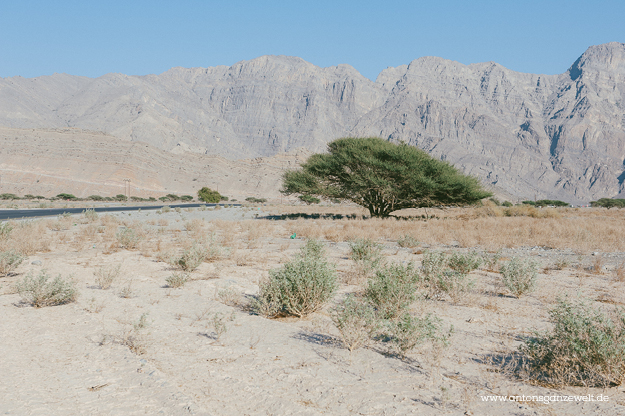 Mountain Safari Musandam