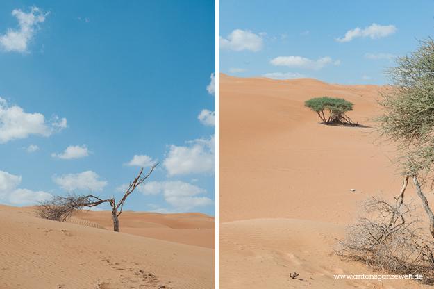 Oman Sur Wüste19