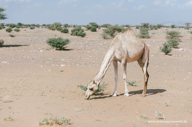 Oman Sur Wüste21