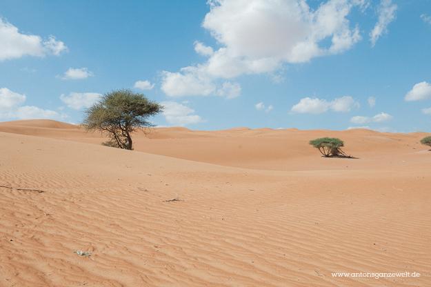Oman Sur Wüste23
