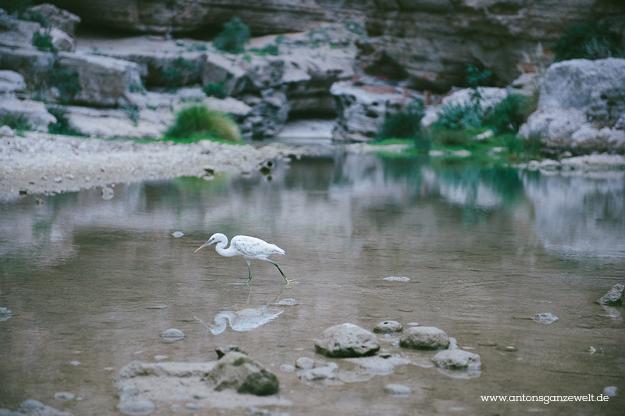Oman Wadi Shab7