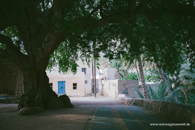 Oman Wadi Tiwi11
