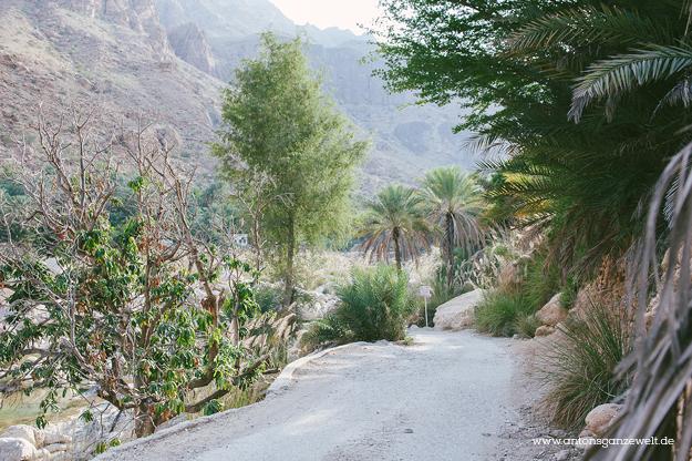 Oman Wadi Tiwi4