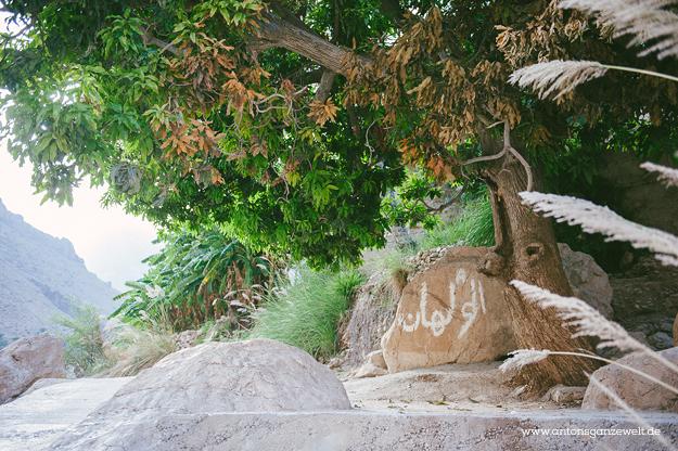 Oman Wadi Tiwi7