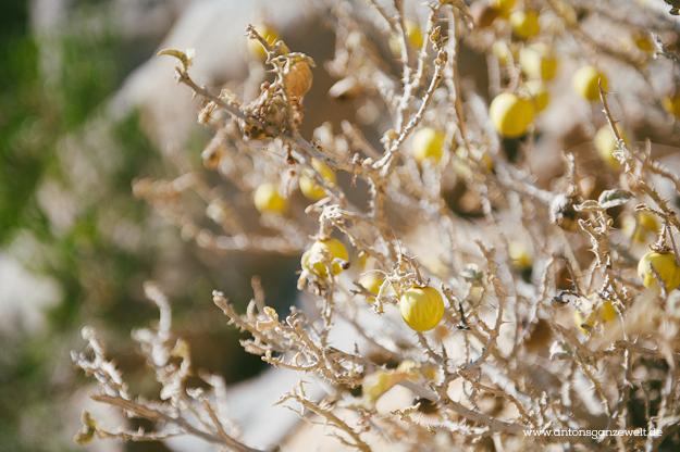 Saiq Plateau Oman17
