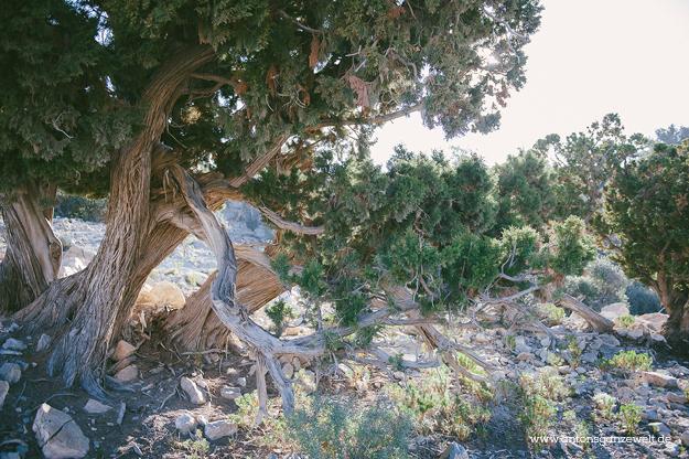 Saiq Plateau Oman19