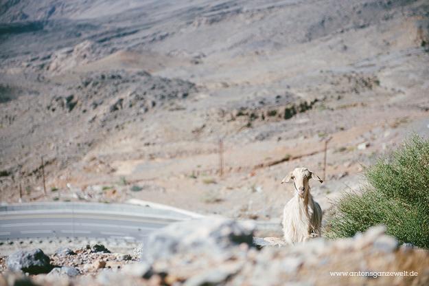 Saiq Plateau Oman2