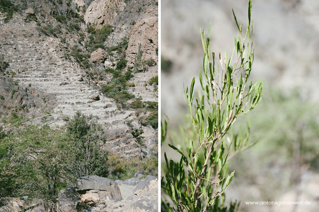 Saiq Plateau Oman3
