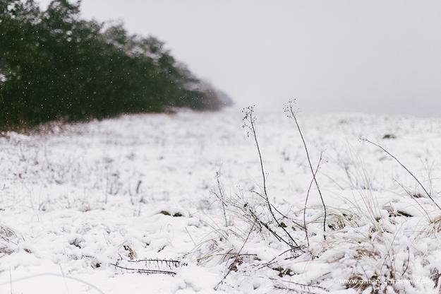 Binz auf Rügen im Winter 15