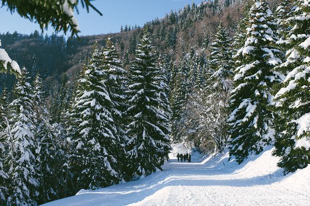 Krunkelbach Hütte Schlittenfahren im Schwarzwaldf15