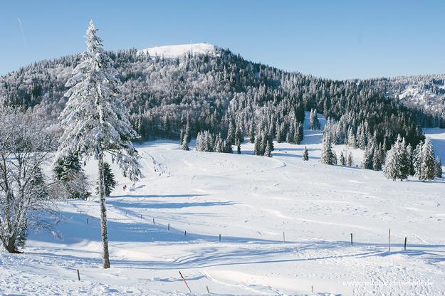Krunkelbach Hütte Schlittenfahren im Schwarzwaldf3