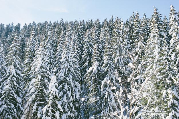 Skiurlaub in Schwarzwald2