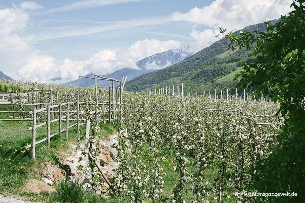 Von Meran nach Cortina d'Ampezzo Grosse Dolomitenstrasse