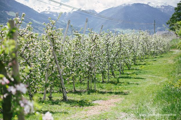 Von Meran nach Cortina d'Ampezzo Grosse Dolomitenstrasse3