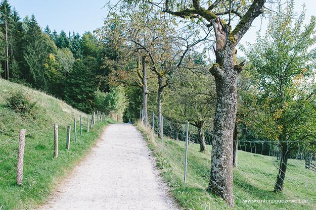 Tagesausflug mit Kindern am Tegernsee8