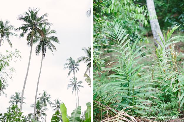 Sansisbar Besuch einer Spicefarm mit Gewürzen10