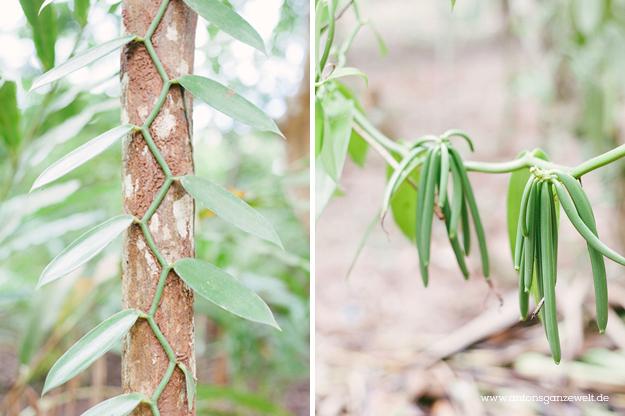 Sansisbar Besuch einer Spicefarm mit Gewürzen15