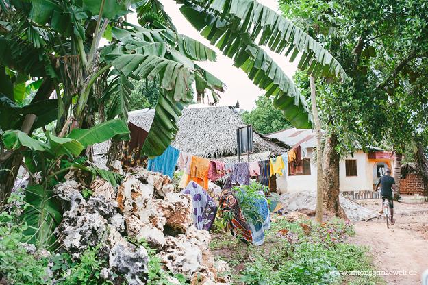 Sansisbar Besuch einer Spicefarm mit Gewürzen4