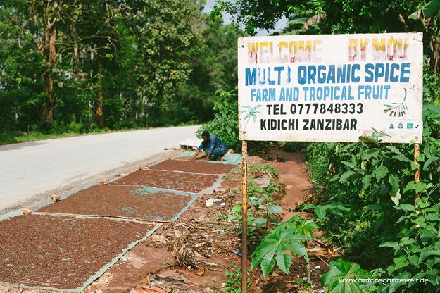 Sansisbar Besuch einer Spicefarm mit Gewürzen6