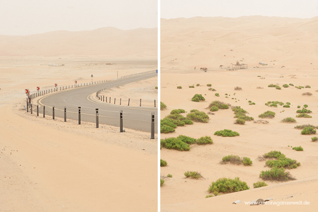 Wüste und Oasen in Abu Dhabi mit Kindern entdecken10