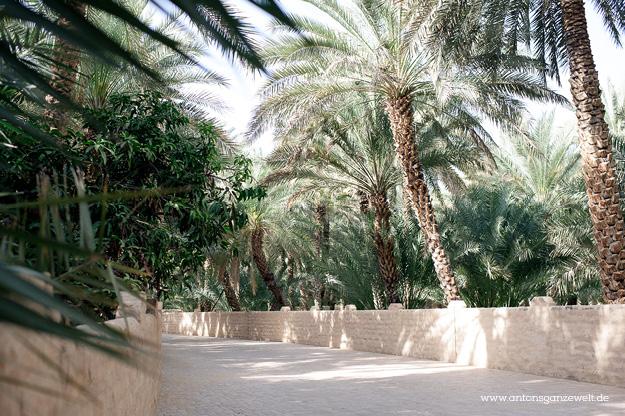Wüste und Oasen in Abu Dhabi mit Kindern entdecken14