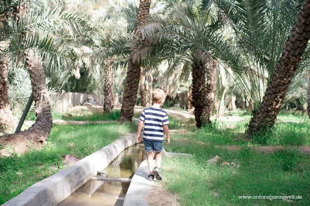 Wüste und Oasen in Abu Dhabi mit Kindern entdecken15