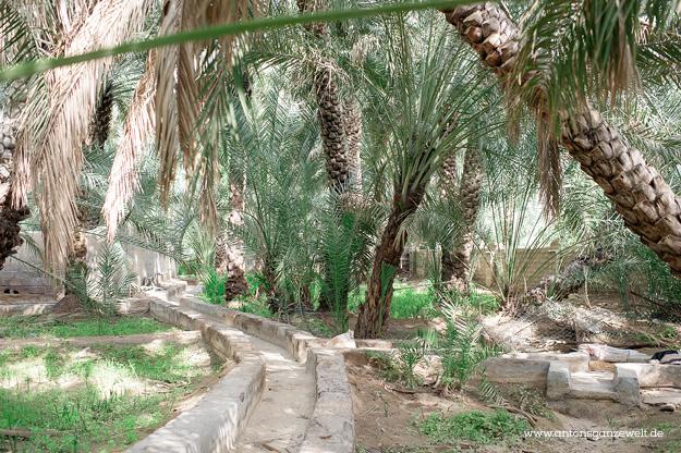 Wüste und Oasen in Abu Dhabi mit Kindern entdecken18