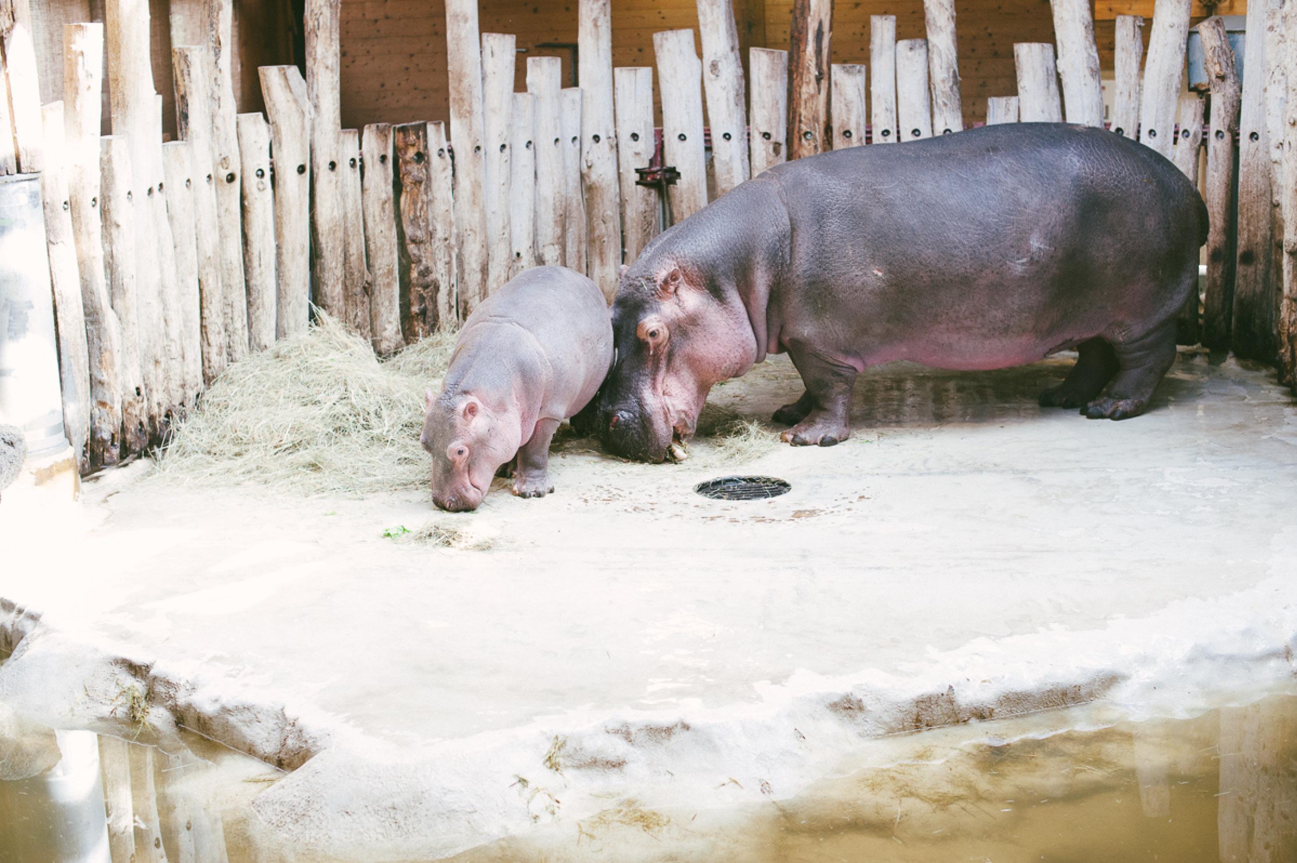 Tiptoi Rally im Zoo Karlsruhe7