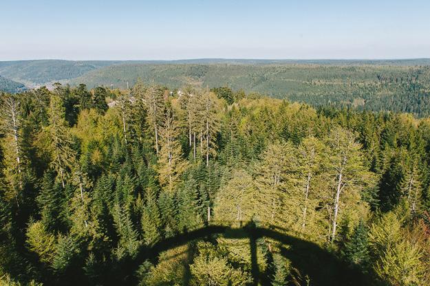 Erfahrung Baumwipfelpfad Bad Wildbad17