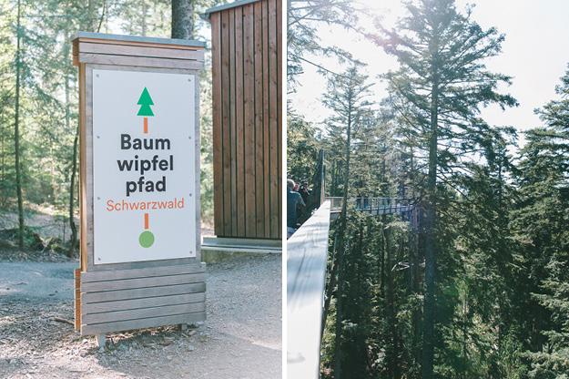 Erfahrung Baumwipfelpfad Bad Wildbad4