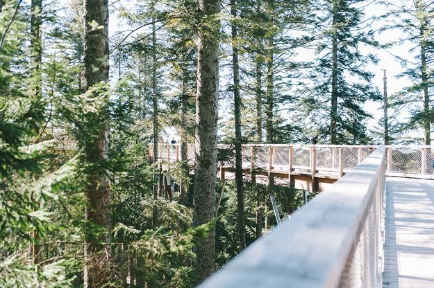 Erfahrung Baumwipfelpfad Bad Wildbad5