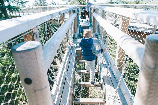 Erfahrung Baumwipfelpfad Bad Wildbad8
