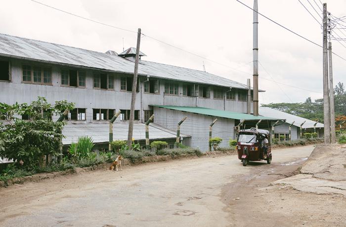 Sri Lanka Teeplantagen Hochland Reiseblog mit Kindern11