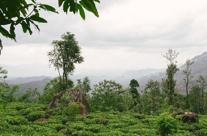 Sri Lanka Teeplantagen Hochland Reiseblog mit Kindern2