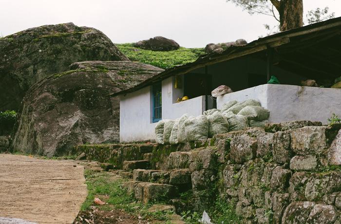 Sri Lanka Teeplantagen Hochland Reiseblog mit Kindern6