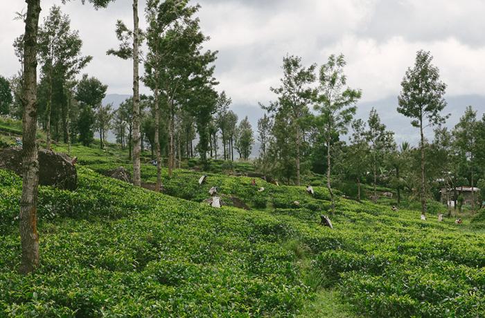 Sri Lanka Teeplantagen Hochland Reiseblog mit Kindern9