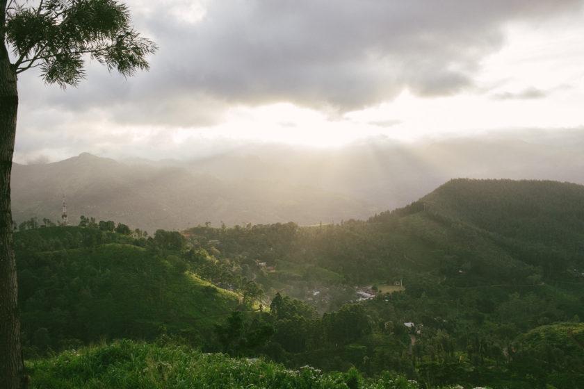 Die Teeplantage in den Highland sind ein absolutes Must See in Sri Lanka!