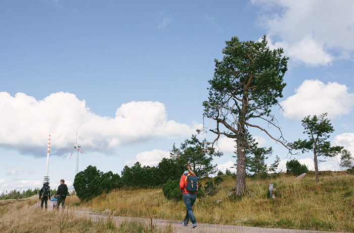 sonntagsausflug-schwarzwald-fuer-familien-hornisgrinde15